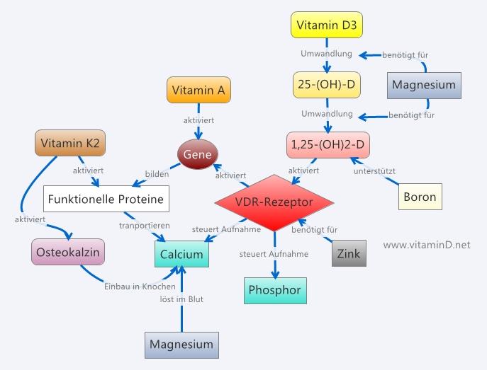 Vitamin D Wichtige Nährstoffkombinationen Dr Schweikart