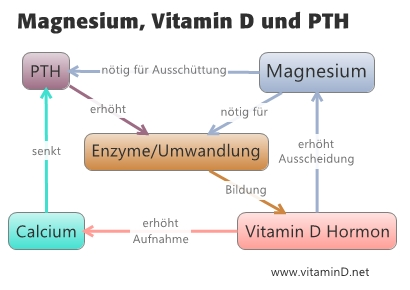 vitamin and pth relationship