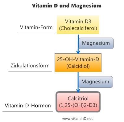 Vitamin D Und Magnesium Dr Schweikart