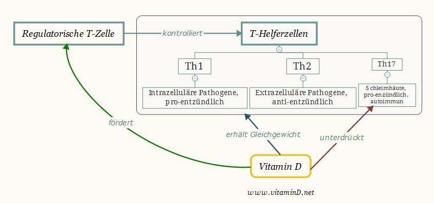 vitamin-d-autoimmun