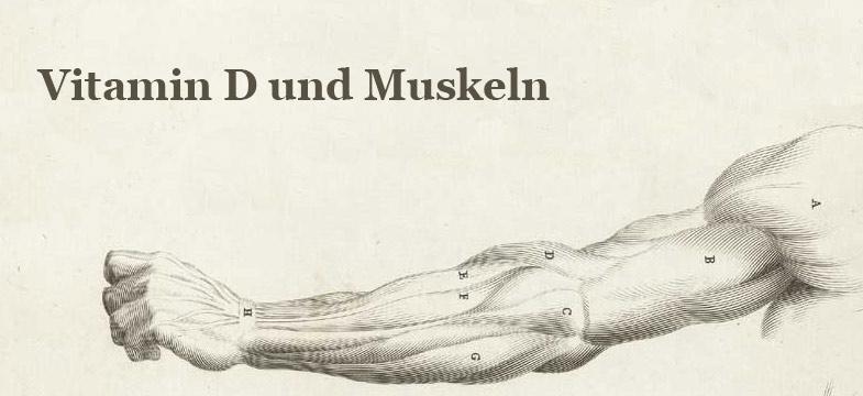 Vitamin D und Muskeln