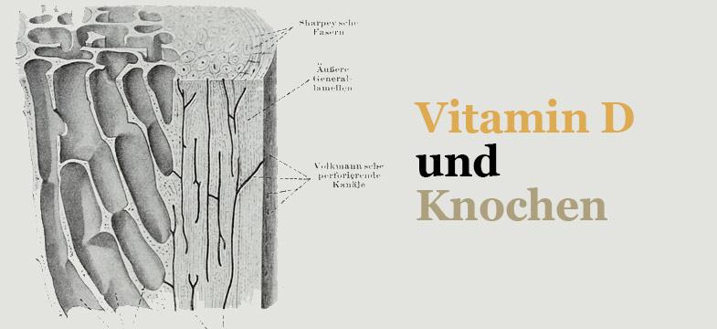 Vitamin D und Knochen