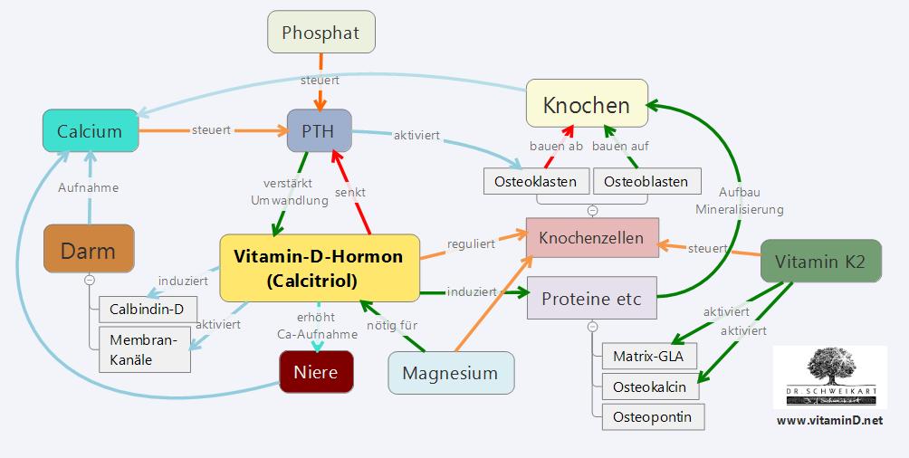Vitamin d Knochen Stoffwechsel