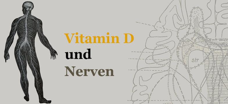 Vitamin D, Nerven und Gehirn