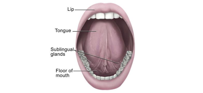 Vitamin D sublingual – bessere Aufnahme im Mund?